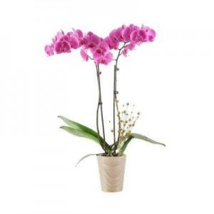 Substrat pentru orhidee Floria, 3 litri