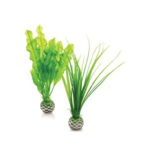 Decoratiuni alge marine mici
