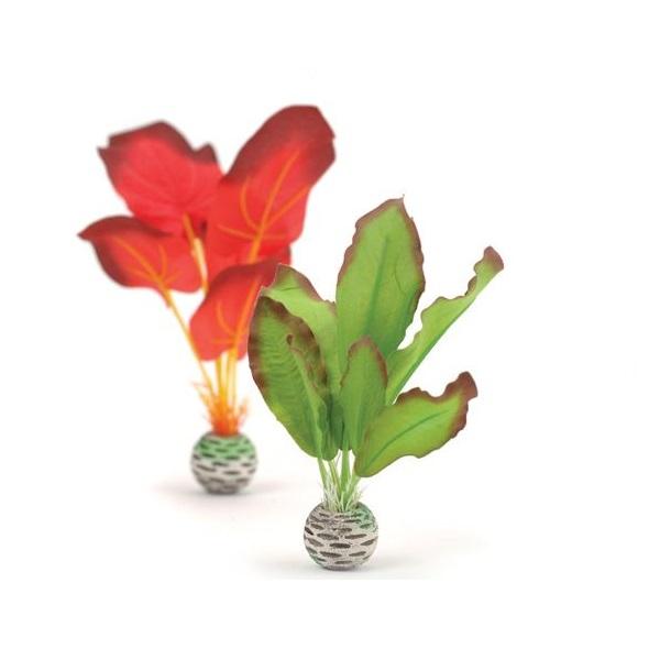 Plante Decorative Mici Verzi Si Rosii