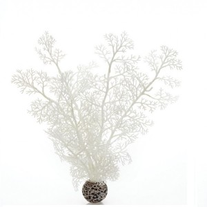 Decoratiune planta marina alba medie