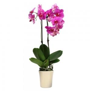 Ingrasamant cu pulverizator pentru orhidee Floria, 500 ml
