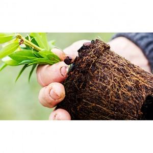 Ingrasamant plante ornamentale Osmocote Start 1.5 luni, 1 kg
